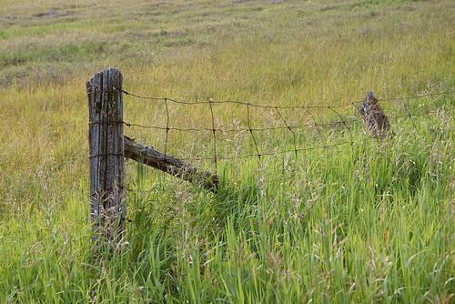 High Tensile Field Fence - Woven Wire Fence – Fixed Knot Fence